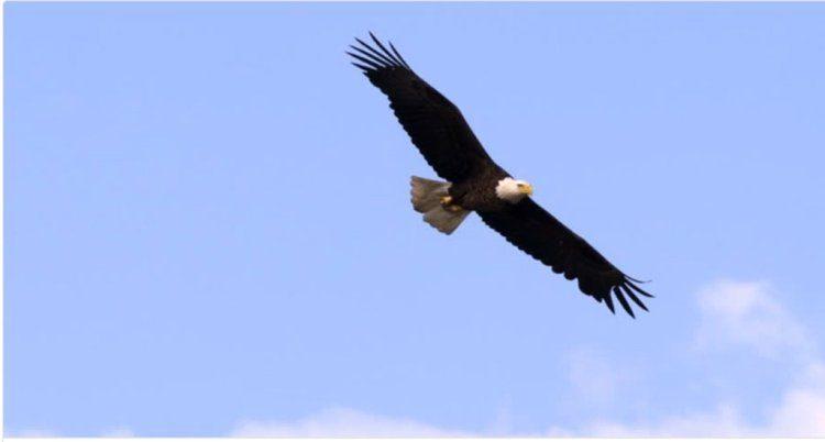 Следование за движением птицы помогает захватить ваш образ. Video by Doug Jensen.