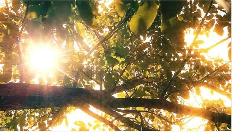 При съемке в избытке света убедитесь, что у вас есть ND фильтры для объектива. Video by Sergey Nadiya.