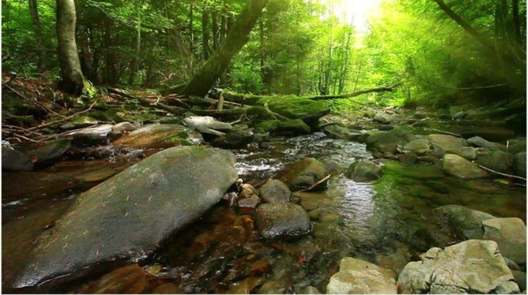 Съемка тихого ручья в прекрасном свете. Video by Sergey Nadiya.